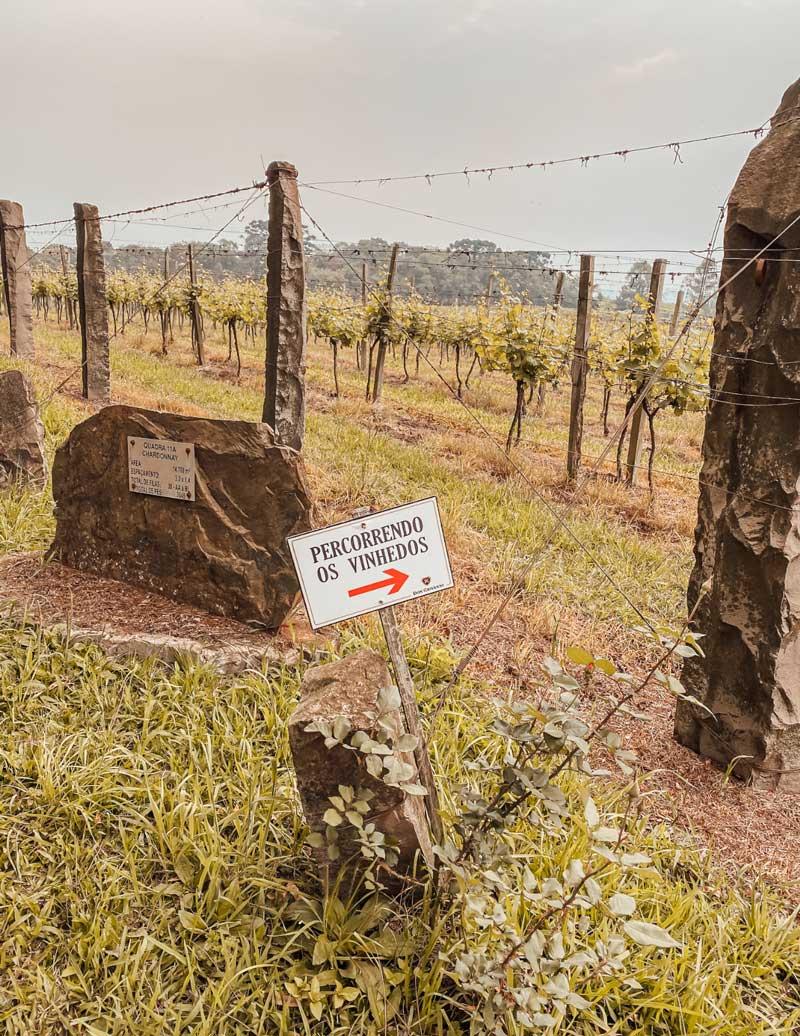 vinicola-don-giovani-bento-goncalves-passeios