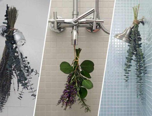 banho-de-eucalipto-beneficios-como-fazer