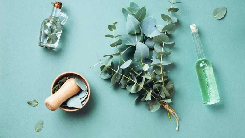 banho-de-eucalipto