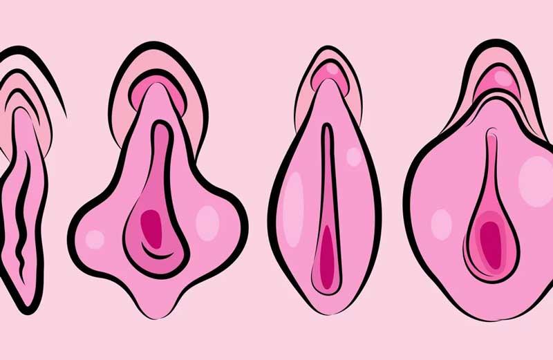 vulva-feminina