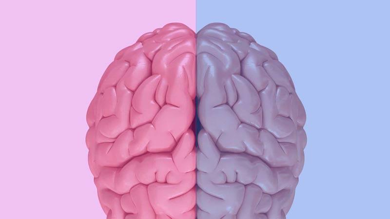cerebro-das-mulheres-e-homens
