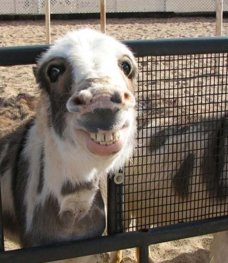sorriso-timido