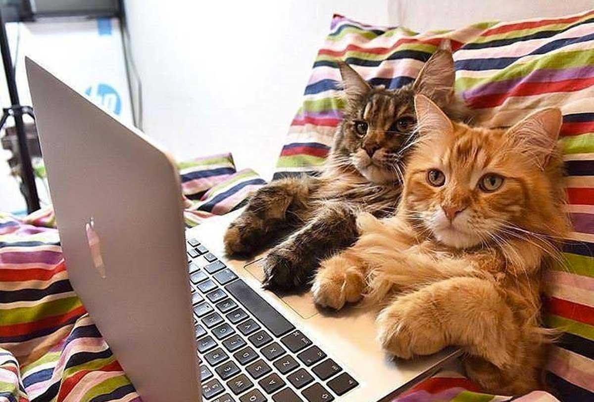 gatos catflix