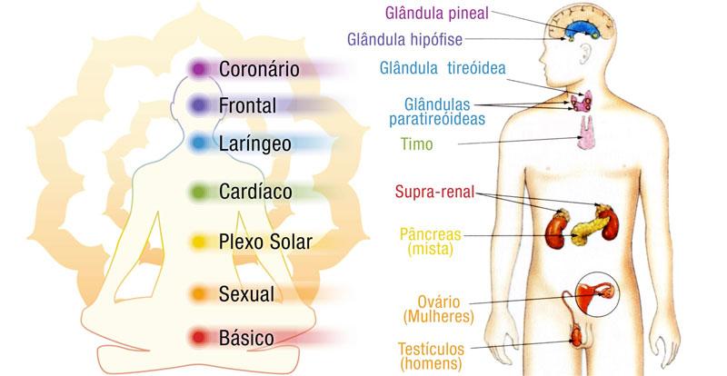 chakras e órgãos