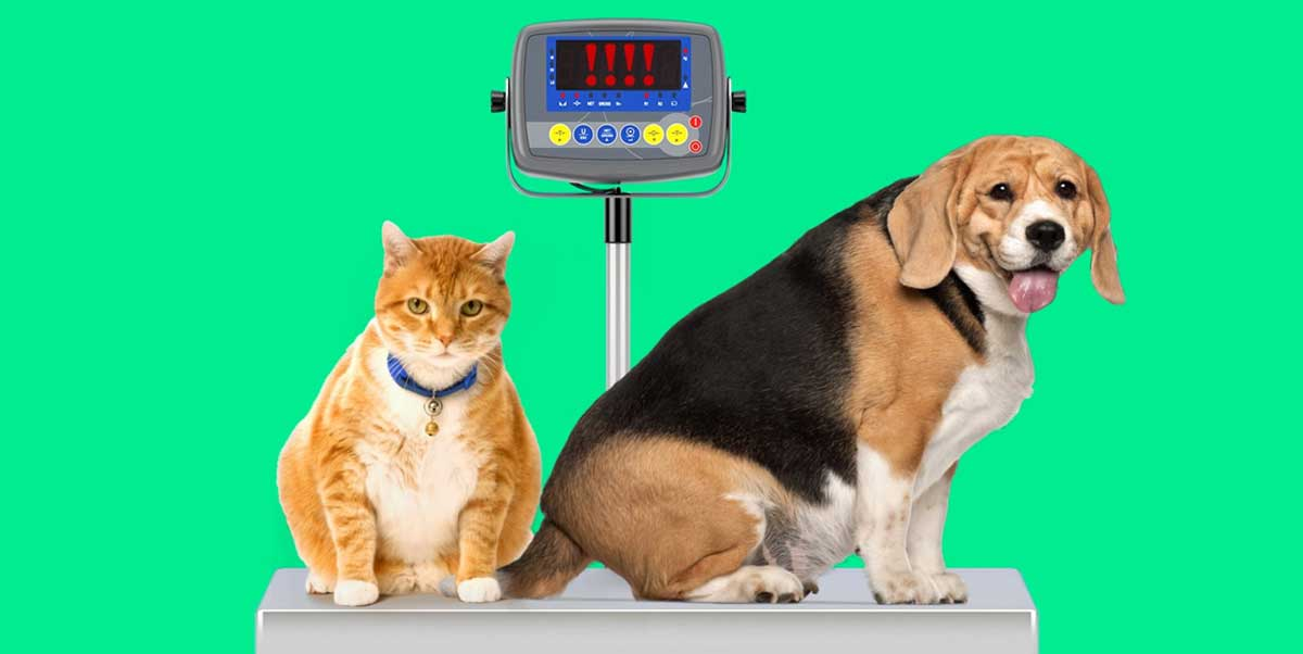 obesidade de cães e gatos